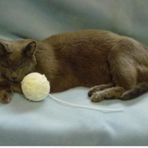 greycat body pic1